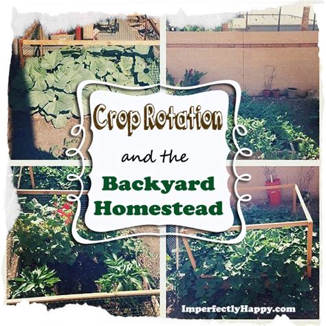 the backyard homestead crop rotation and the backyard homestead gardening
