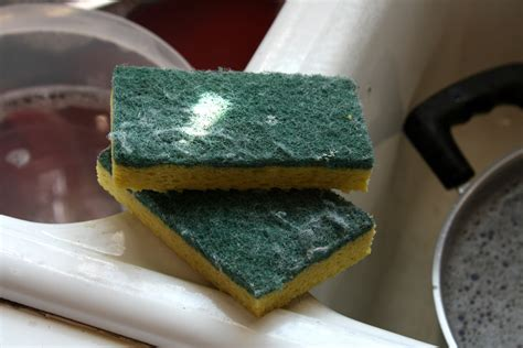 How To Clean A Smelly Kitchen Sponge by The Side Of Cleaning Kitchen Sponges More