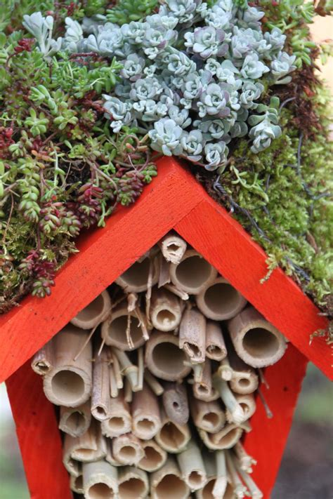 ladybug house how to build a house for insects hgtv