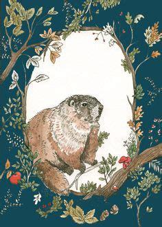 regarder groundhog day coloriage marmotte 224 colorier dessin 224 imprimer
