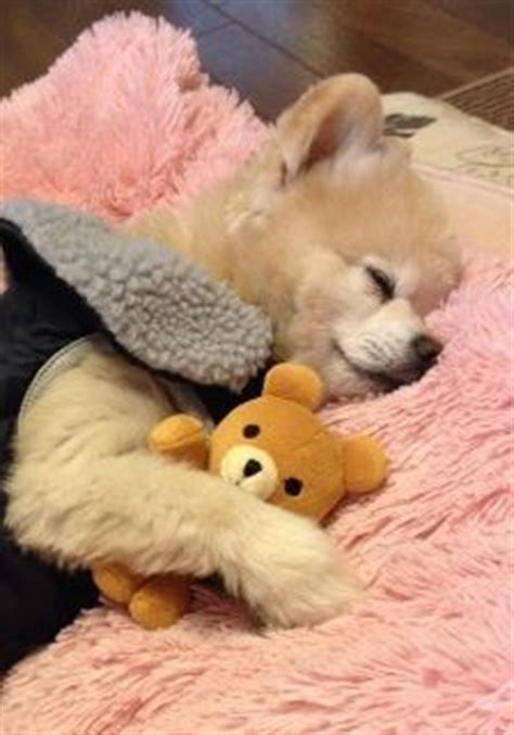 images  sleeping dogs  pinterest pets nap
