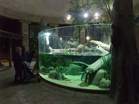fish tank house jaguar house aquarium at chester 04 02 12 187 chester zoo gallery