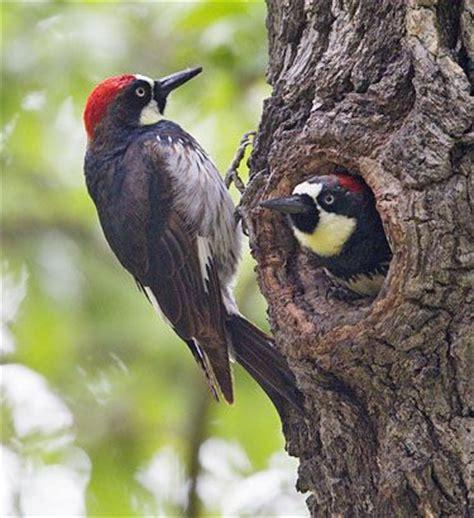 953 best bird love oregon pacific northwest images on