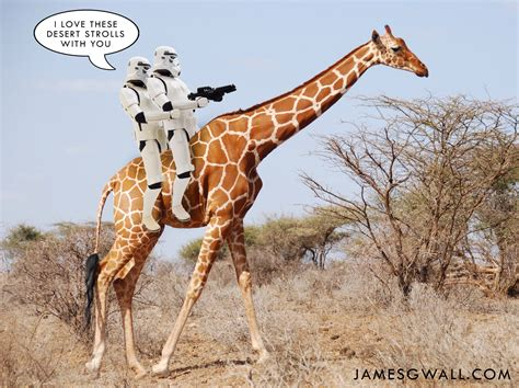 Giraffe Spider Meme - stormtroopers love a giraffe ride james g wall