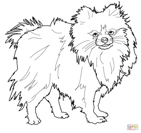 How To Draw Pom Dog Pom Pom Coloring Pages