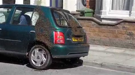 how to get rid of a swarm of bees 20 000 bees swarm car in portsmouth george heal