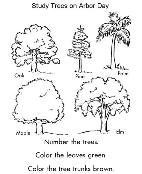 tree coloring page pdf arbor day coloring pages tree identification coloring