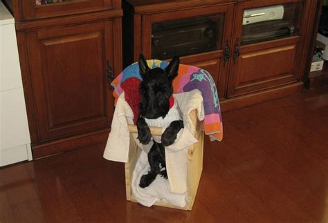 How To Build A Bailey Chair For Dogs by Canine Myasthenia Gravis The Bailey Chair Essential For