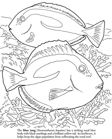 great barrier reef coloring pages coloring pages