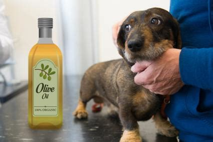 can dogs olive use olive for s skin lovetoknow