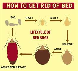 how do i get rid of a mattress how to get rid of bed bugs infographic thepestkillers