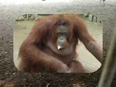 Binatang Kecil Di Sekitar Kita binatang binatang lucu di sekitar kita dunia binatang