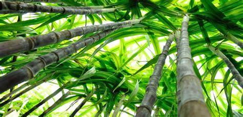 pianta da giardino piante tropicali da giardino quali scegliere e coltivare