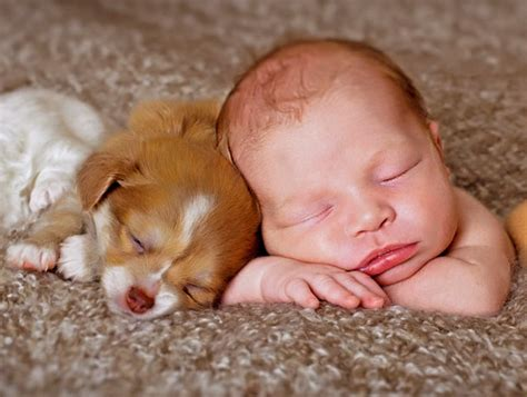 babies and puppies top 10 baby and puppy pictures