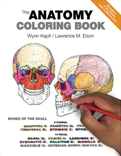 anatomy coloring book flash cards anatomy physiology coloring books