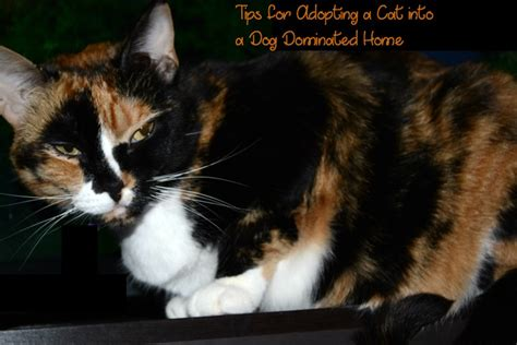 adopting a tips tips for adopting a cat into a dominated house needs a bottle