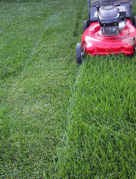 Image Gallery Mowing A New Lawn