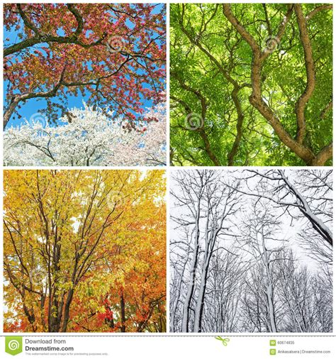 imagenes de invierno verano otoño y primavera 193 rboles en primavera verano oto 241 o e invierno foto de