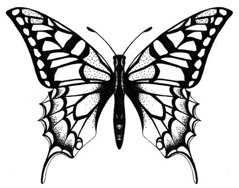sohadesign ir butterfly designs drawings clipart best