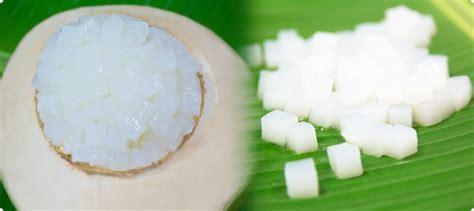 Bibit Nata De Coco mengenal nata de coco manfaatnya kagakupedia