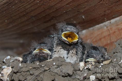 caring for baby birds www pictat ro photograph by preda