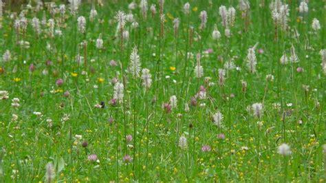 Unkraut Vernichten Mit Chemie by Unkraut Im Rasen Vernichten So Funktioniert Es Mit Und