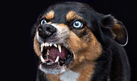 dogs with rabies rabies causes 160 deaths daily in poor regions of world madmikesamerica