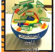 Animal Cell Styrofoam Ball Project How Make Pictures