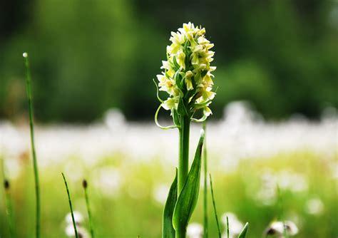 orchidee im schlafzimmer orchideen im schlafzimmer ungesund brocoli co