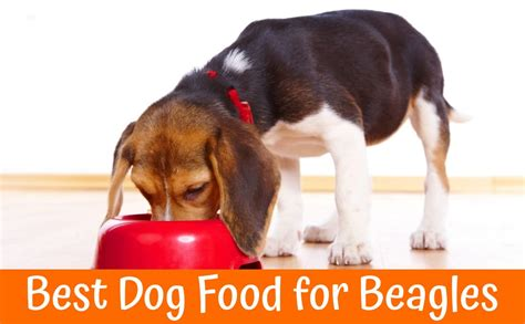 best puppy food 2017 best food for poodles guide for 2017 pet supplies