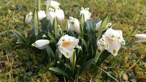 Garten Was Pflanzen Im April by Gartenarbeit Im April Der Garten Erwacht Was Jetzt Zu