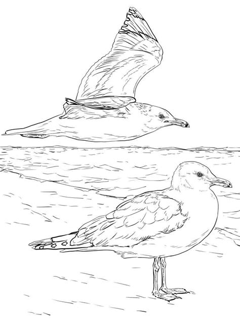 seagull coloring pages   print seagull