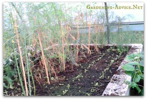 gardening beds vegetable garden the raised bed vegetable garden
