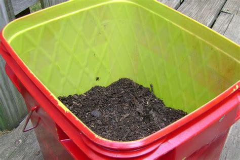 Cat Litter Planter by Turn A Cat Litter Pail Into A Planter