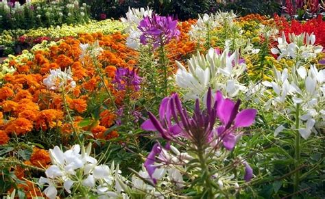 giardino sempre fiorito continua a sorrento antiquaria fino al 2 giugno mobili