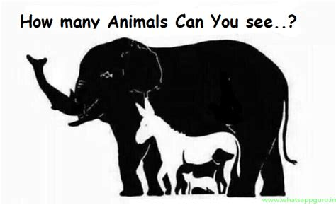 How To Find Out How Many Visit A Website How Many Animals Do You See In The Photo