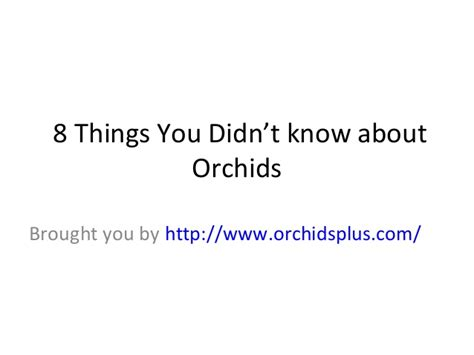8 Things You Didnt About And Attraction by 8 Things You Didn T About Orchids