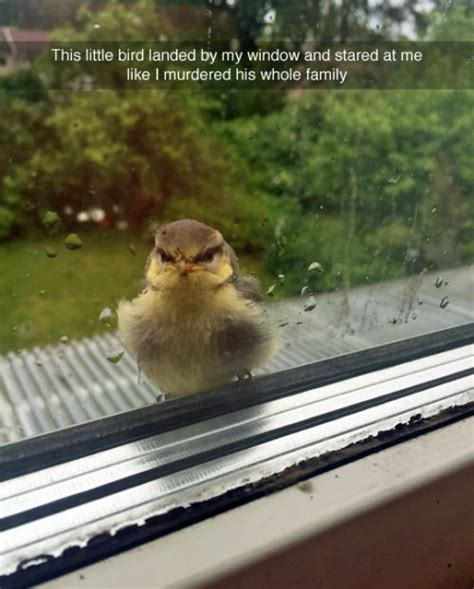 Adorable Animal Memes - top 30 funny animal memes and quotes quotes and humor