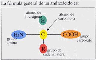 cadena lateral de aminoácidos bioqumica los amino 193 cidos
