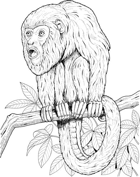 colobus monkey coloring page monkey coloring pages