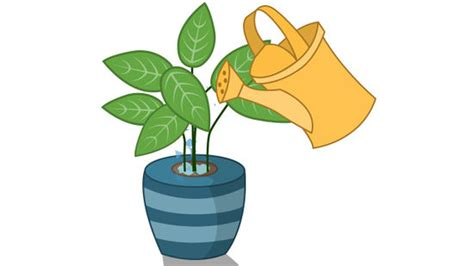 4 plants you can grow today to keep mosquitoes away the plant grow clipart www pixshark com images galleries