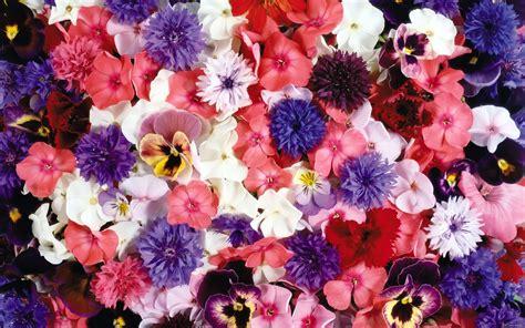 imagenes de rosas diferentes colores wallpapernarium flores de diferentes clases colores y tama 241 os