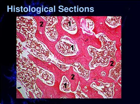 histology sectioning ppt introduction to oral histology powerpoint