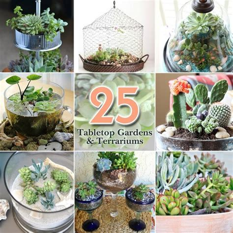 ideas  tabletop gardens  terrariums pretty