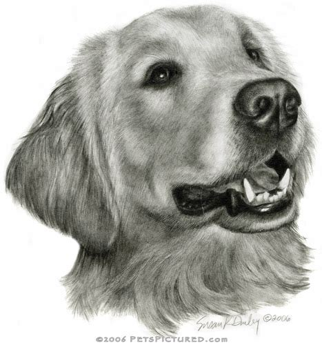 drawings of golden retrievers golden retriever portrait original pencil drawing prints apparel gifts pencil