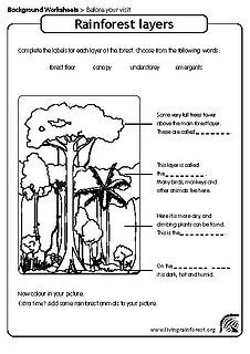 section 4 2 what shapes an ecosystem worksheet answers layers of the rainforest worksheet photos getadating