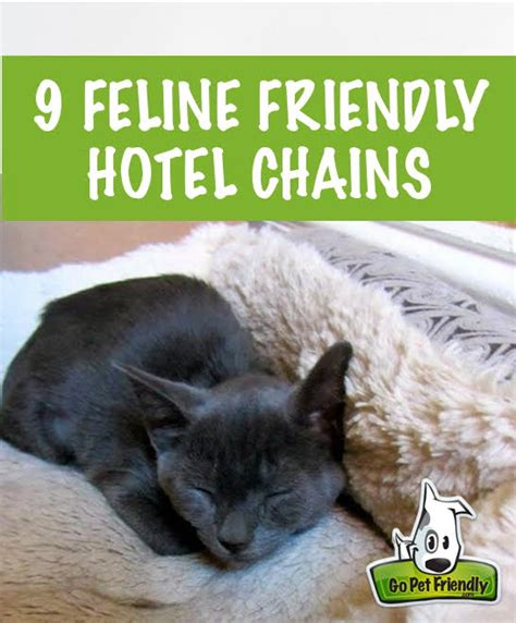 hotel chains that allow dogs nine cat friendly hotel chains