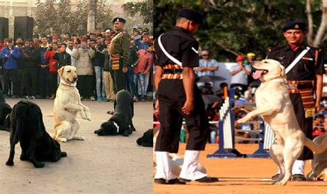 adopt a retired service dogs for adoption adopt retired canine soldiers in delhi this weekend