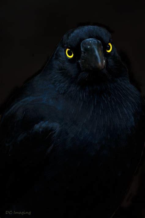 obsidian color eyes pinterest the world s catalog of ideas