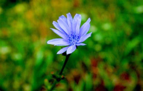 astro flower non astro